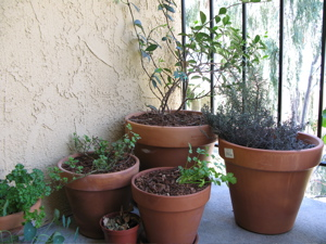 Image description: a cluster of potted plants on a balcony.