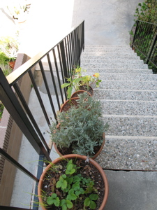 Image description: potted plants along a staircase.